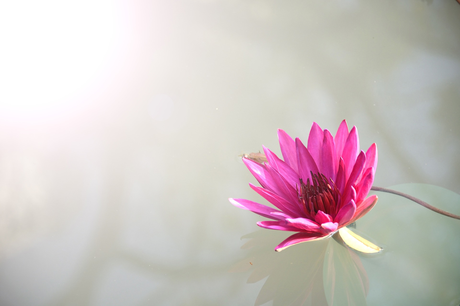 http://www.mindfulmente.it/wp-content/uploads/2019/09/flora-1839558_1920.jpg
